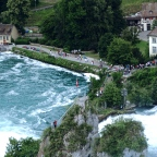 A Cow at Rhine Falls